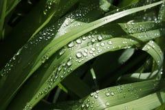 свежая весна зеленого цвета травы здоровая Стоковые Фотографии RF
