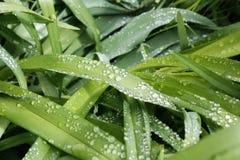 свежая весна зеленого цвета травы здоровая Стоковая Фотография
