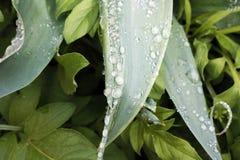 свежая весна зеленого цвета травы здоровая Стоковые Изображения RF