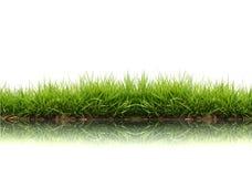 свежая весна зеленого цвета травы Стоковое Изображение RF