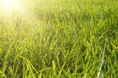 свежая весна зеленого цвета травы стоковые фото