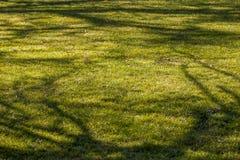 свежая весна зеленого цвета травы здоровая Стоковое Изображение