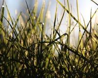 свежая весна зеленого цвета травы здоровая Стоковые Фото