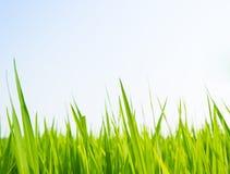 свежая весна зеленого цвета травы Стоковая Фотография RF