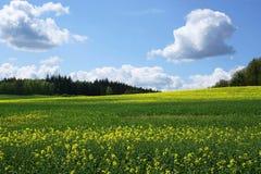 свежая весна ландшафта Стоковые Изображения