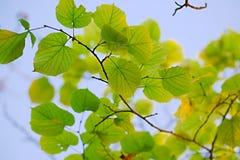 свежая весна листьев стоковые изображения rf