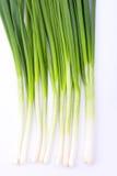свежая весна лука Стоковая Фотография RF