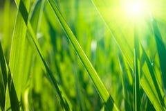 свежая весна травы Стоковое Изображение