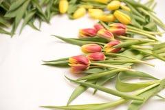 Свежая весна, цветки пасхи Стоковые Фотографии RF