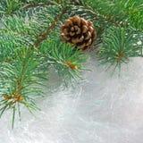 Свежая ветвь ели с шишкой на белой предпосылке декоративного ti Стоковая Фотография