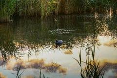 Свежая вода в степи Стоковое Изображение