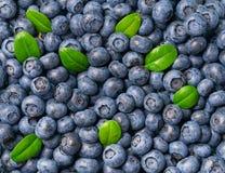 Свежая голубика и зеленая предпосылка листьев Конец-вверх ягод голубики текстуры стоковое изображение