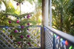 Свежая естественная вечнозеленая рождественская елка Стоковые Изображения RF