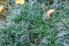 Свежая естественная предпосылка природы текстуры зеленой травы в парке земная консервация заволакивания и окружающей среды, ландш стоковое фото