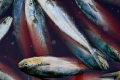 Свежая задвижка очень вкусных рыб моря Стоковая Фотография