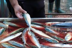 Свежая задвижка очень вкусных рыб моря Стоковые Изображения
