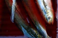 Свежая задвижка очень вкусных рыб моря Стоковое Изображение RF