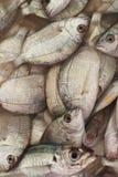 Свежая задвижка рыб dorado Стоковые Изображения