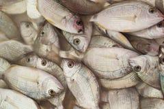 Свежая задвижка рыб dorado Стоковые Фото