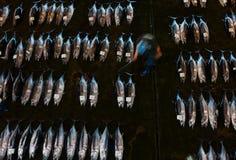 Свежая задвижка тунца на аукционе рыб Стоковое Фото