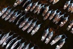 Свежая задвижка тунца на аукционе рыб Стоковая Фотография