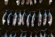 Свежая задвижка тунца на аукционе рыб Стоковые Изображения RF