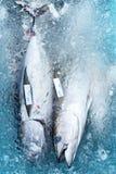Свежая задвижка тунца Стоковые Фотографии RF