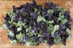Свежая зеленая и фиолетовая курчавая листовая капуста Стоковое Фото