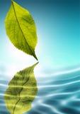 свежая зеленая природа Стоковое фото RF