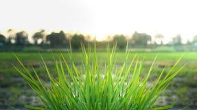 Свежая зеленая трава в стране Стоковое Изображение RF