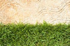 Свежая зеленая трава Стоковое фото RF