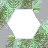 Свежая зеленая тропическая картинная рамка сада иллюстрация штока