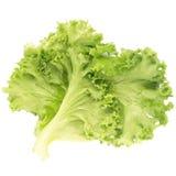свежая зеленая изолированная белизна салата листьев Стоковое Фото