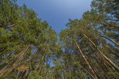 Свежая зеленая листва дерева в лесе Стоковое Изображение