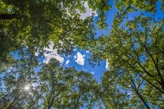 Свежая зеленая листва дерева в лесе Стоковая Фотография RF