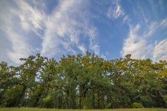 Свежая зеленая листва дерева в лесе Стоковое Изображение RF