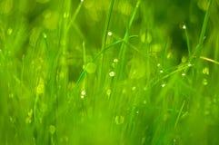 Свежая зеленая трава как предпосылка весеннего сезона Стоковое Изображение RF