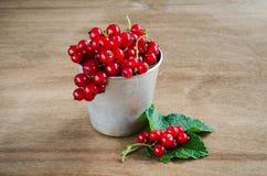 Свежая зрелая органическая красная смородина в алюминиевой чашке Стоковые Изображения
