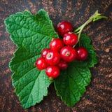 Свежая зрелая органическая красная смородина в плите Стоковое Фото