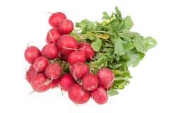 свежая изолированная белизна редиски красная Стоковая Фотография