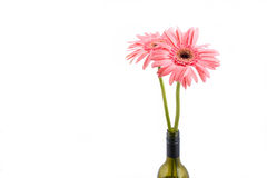 Свежая изолированная хризантема в бутылке вина над белой предпосылкой Стоковые Изображения RF