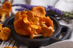 Свежая лисичка грибов на деревянной предпосылке Стоковые Изображения