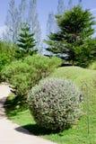 Свежая искусства куста сада декоративная Стоковое Фото