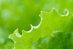 Свежая и сочная трава Стоковая Фотография RF
