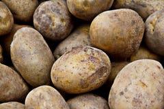 Свежая картошка Стоковая Фотография