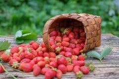 Свежая клубника сада в плетеной корзине на деревянной предпосылке Стоковые Фото