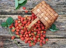 Свежая клубника сада в плетеной корзине на деревянной предпосылке Стоковое фото RF