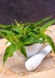 Свежая крапива на деревянном столе Источник витаминов как обрабатывать perforatum микстуры hypericum нажатия эффективный травяной Стоковое Изображение RF