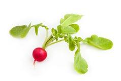 Свежая красная редиска изолированная на белой предпосылке Стоковые Фотографии RF