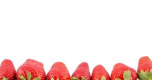 свежая клубника Стоковая Фотография